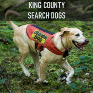 King County Search Dogs (KCSD) provide canine search services within King County. All handlers are volunteers who provide their own dogs and outdoor equipment. Each team trains in either air scent search (to locate any human within the team's search area) or tracking/trailing (following a specific person's scent path). Teams also train in specialty search areas, such as evidence, water, disaster, and avalanche searches.