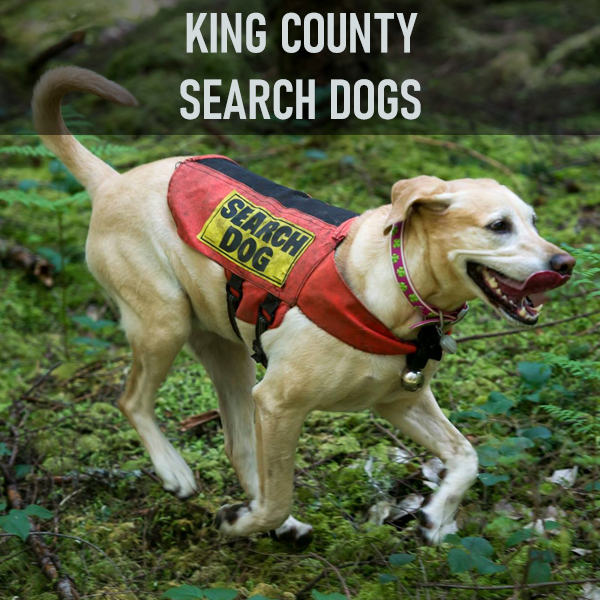 King County Search Dogs (KCSD) is the largest volunteer K9 search unit in Washington. Dog-handler teams train to national standards in Airscent (finding any human in a large area) and Trailing (following the path of a specific person) and participate in missions throughout the State. Many teams have additional specialized skills in Human Remains Detection, Water, Evidence, Avalanche and Disaster searching.